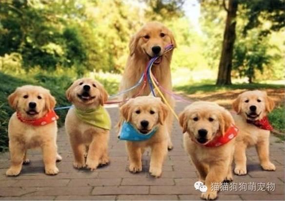 好有爱的一家人啊!