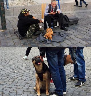 国庆所见:国外狗狗品种多,哪里都能去
