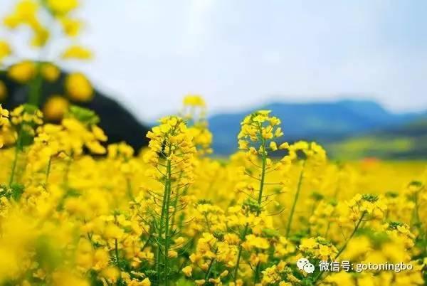 """比""""三生三世""""十里桃林还要美的花海就在宁波,周末约起!"""