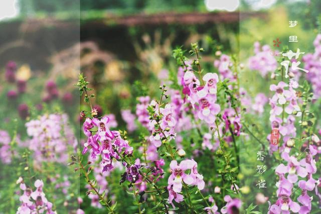 意境中国:古诗词里的花花世界