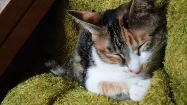 猫在客厅睡觉,家里的狗狗看到后,怕猫咪着凉,竟把自己当被子!