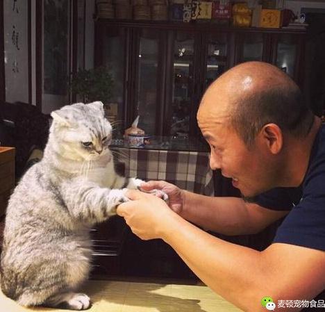 当初极力反对养猫的父母养了猫以后彻底沦为猫奴,你爸妈是这样吗