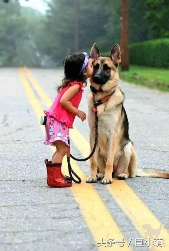真实狗狗故事:说好了建国后的动物不准成精呢!