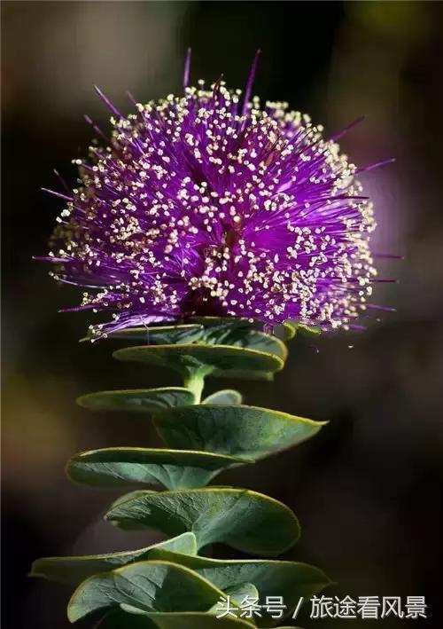 大千世界无奇不有,人一辈子都很难以见到的奇花异草!