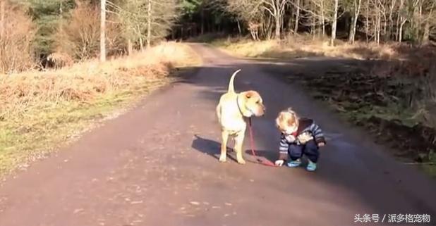 狗狗牵着小主人回家,途中小主人玩得忘我,狗狗耐心等待,暖哭