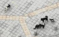 鄞州公園二期群狗吠叫追逐