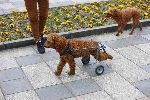 """宁波一年内养狗投诉近千起!女子被邻居家的狗咬伤, 对方竟称是""""流浪狗""""……"""