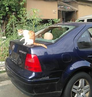 小区里有一只猫,所有车顶都是它的舞台……