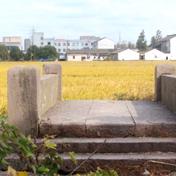 姜山镇上的两座古桥