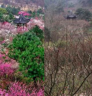 九峰山看梅花节,买家秀和卖家秀的区别