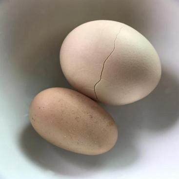 母鸡生出这种蛋,真的好迷你