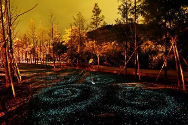 约吗?宁波这条路一到夜晚就如星空闪闪发光