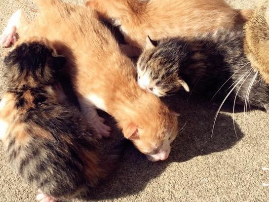 家里的功勋猫咪生了四个崽子,个个都奶萌奶萌的!