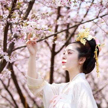 赏樱花,偶遇美丽古装小姐姐!