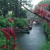 谷雨——告别春天的节气