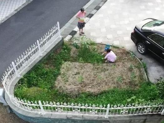 宁波这个高档小区 别墅业主圈地种菜6年之久却拆不掉!