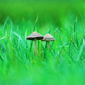 雨后的草叢