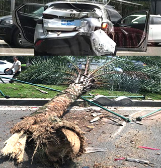 东部新城看到一起吓人车祸,树都撞断了