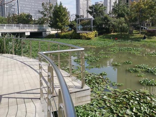 东部新城有一段河,最近很多水葫芦。会传播吗?