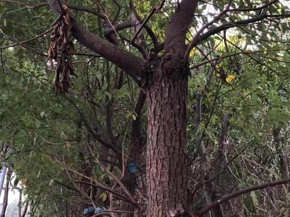 马路边看到有几棵树挂着牌子,好奇心让我上去瞅瞅