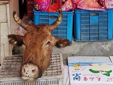 一个牛头就这样摆着……血水还淌下来,放在水果的旁边