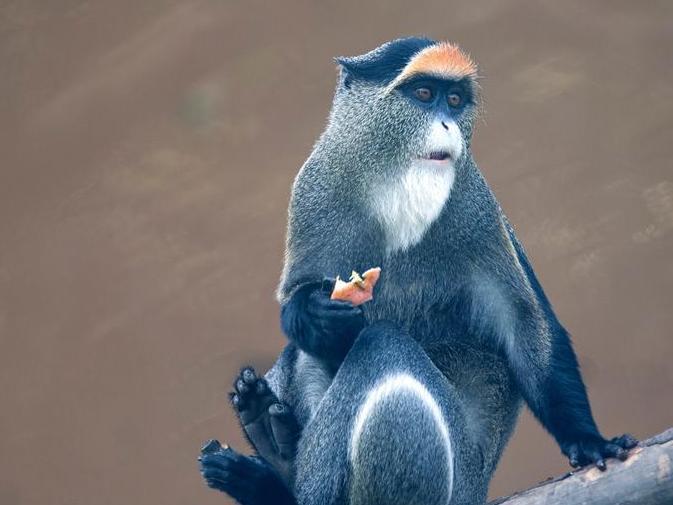 宁波的这里,竟会有这么多种类的猴子!好玩