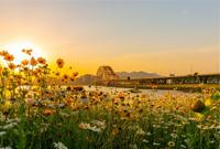 梅山的红桥与花海!美翻~