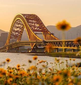 北仑梅山的红桥与花海!美的大气异常!