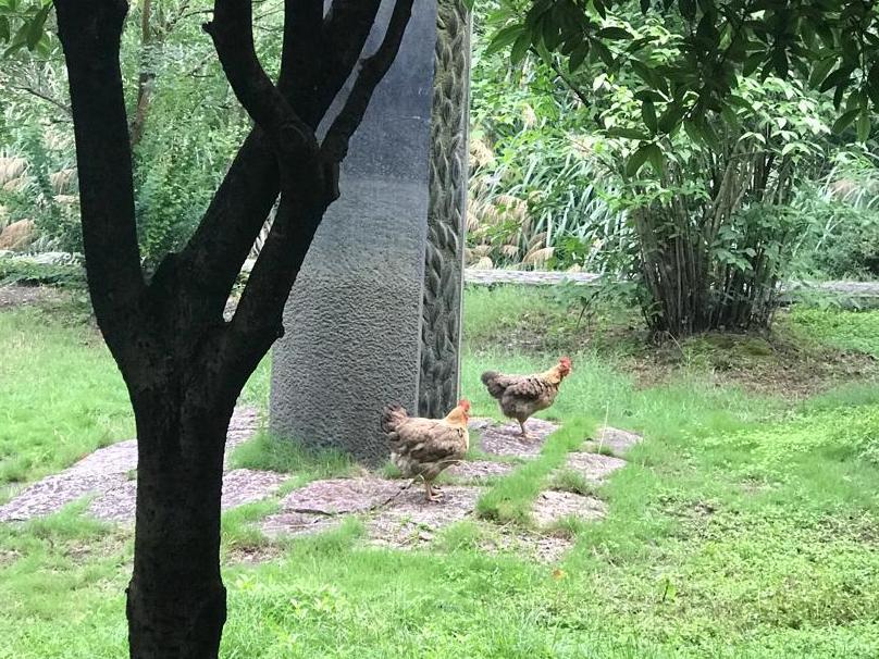 珍贵的河姆渡遗址,活鸡乱跑。保安却不动如山