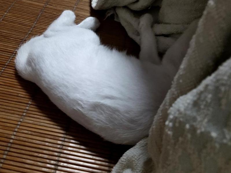 斗猫记!猫要钻被窝,整天被它折腾得睡不着!求招