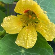 雨后的露珠和花
