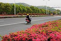 我们宁波的公路多么漂亮