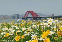 红桥、花海,风景这边独好