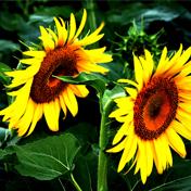 常见花一样美