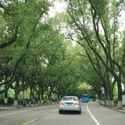 最美长春路,绿树成荫