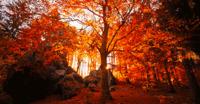 """12月9日/10日九溪十八涧,西湖最胜处,共赏杭城最美徒步线秋色,""""好色之徒""""们都行动起来吧!"""